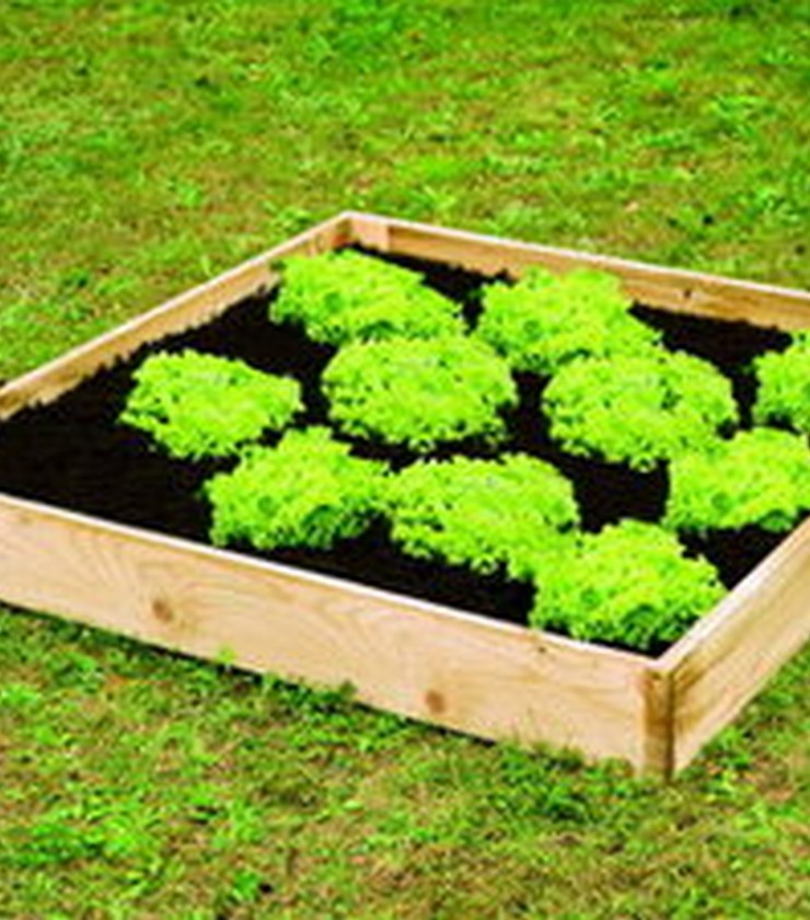 Raised Veggiebed